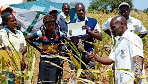 Weak links hamper knowledge sharing in agriculture