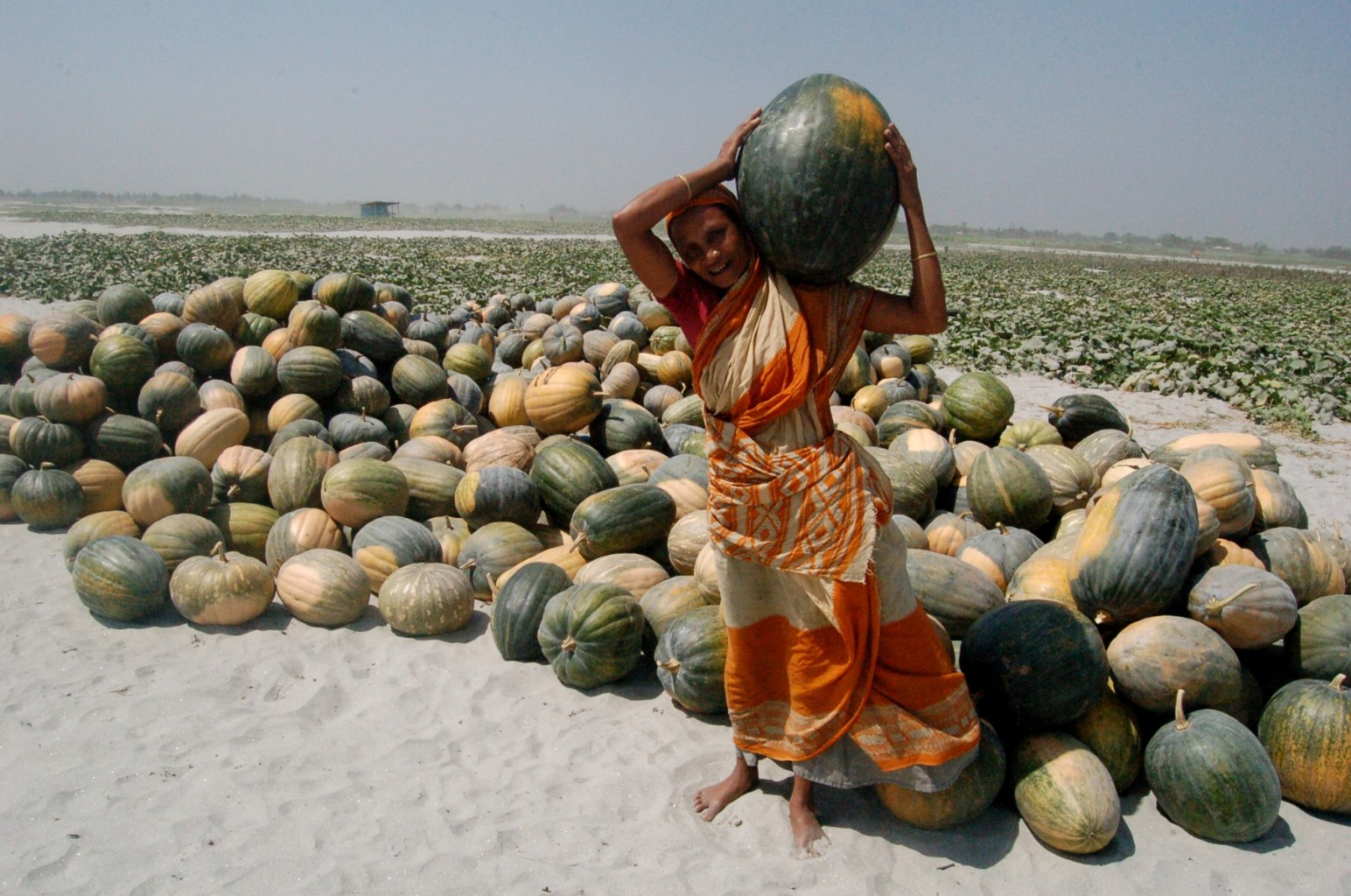 Sandbar cropping in Bangladesh, an innovative technology solution for millions