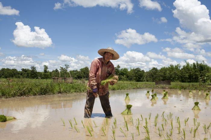AIDF Food Security Summit Asia 2014 - Food Production