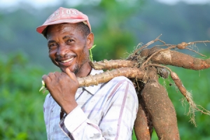 Farmers in Cameroon are overcoming drought with the help of new seeds