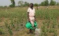 DFID launch new satellite programme to protect millions of farmers in Africa