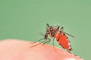 Pokhara, Nepal sees largest outbreak of Dengue Fever