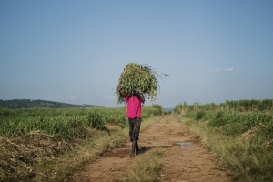 Rwanda launches its largest climate resilience initiative to date