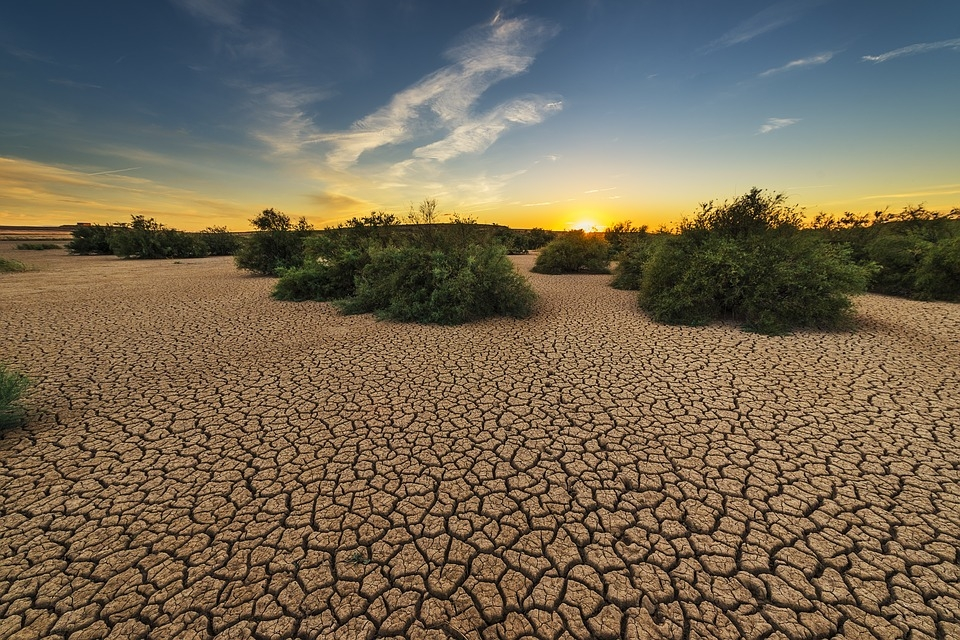 Land degradation could threaten 700 million people by 2050
