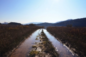Wetlands are key to Disaster Risk Reduction